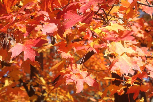Missouri autumn leaves