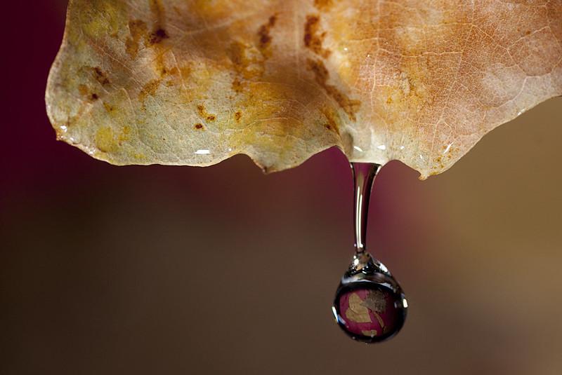 Lágrimas otoñales / Autumnal tears