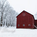Red Barn in a Fresh White World by paininthelens