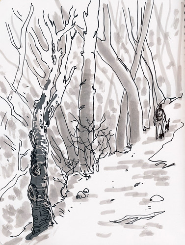 January 2014: Forest Walk by apple-pine