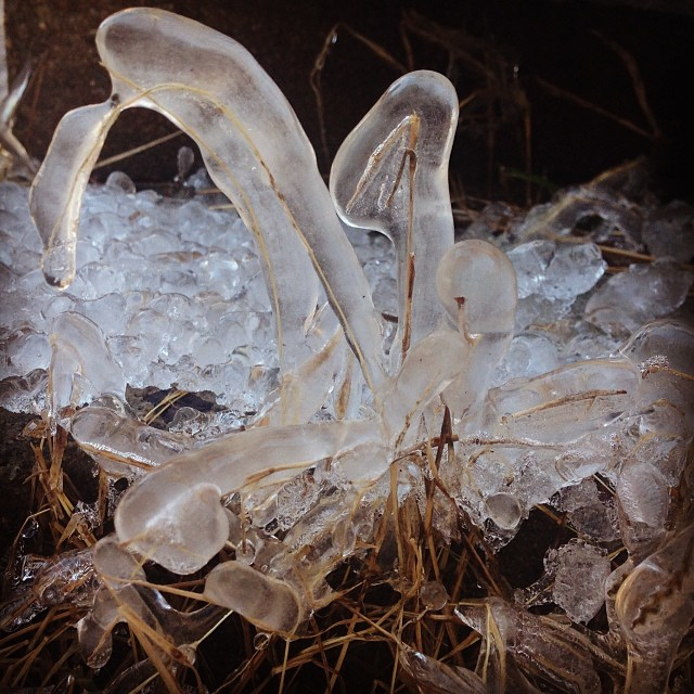Frozen grass.