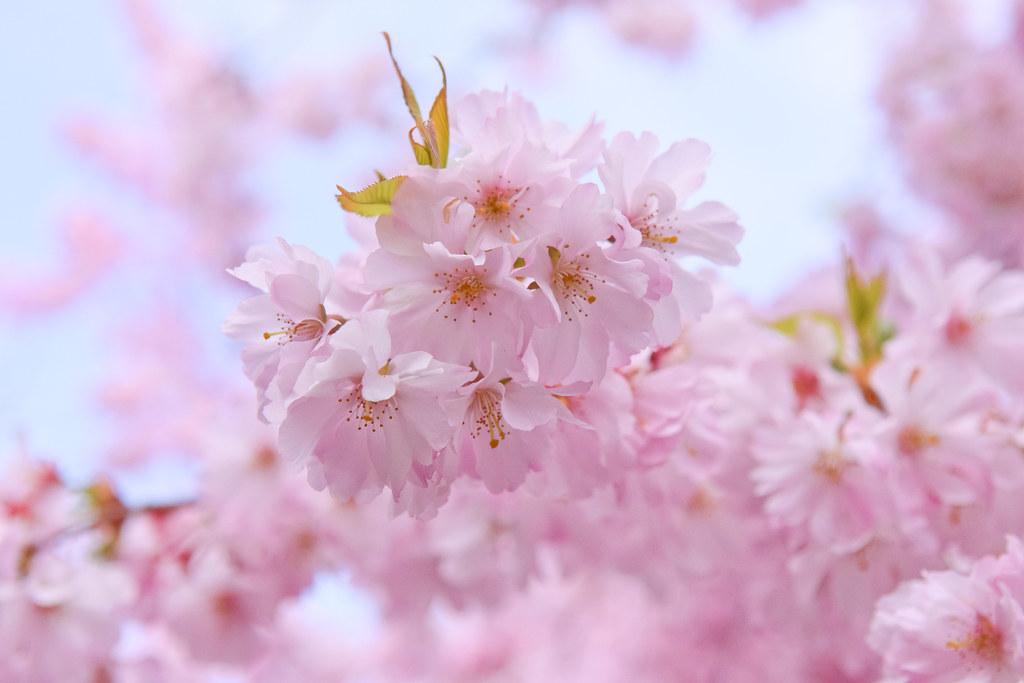 Le printemps au Jardin Saint-Simonian