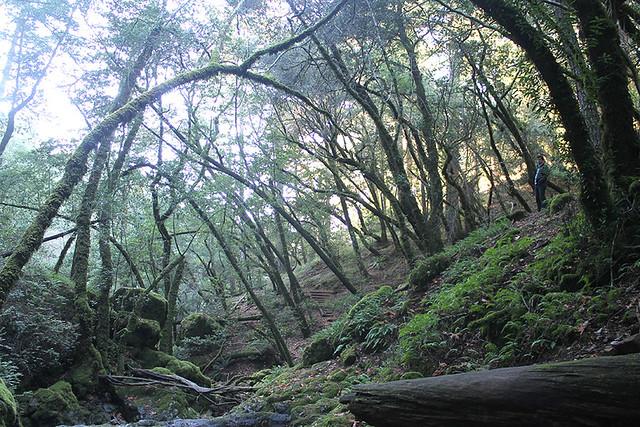 steepravine-pt2_2