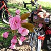 Bikes and blossoms in #bikedc