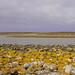 Malvinas en colores .. Falkland's colors