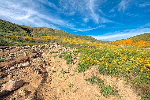 Walker Canyon Poppy Trail