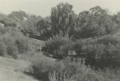 Creek at Willunga Police Station, 1920s