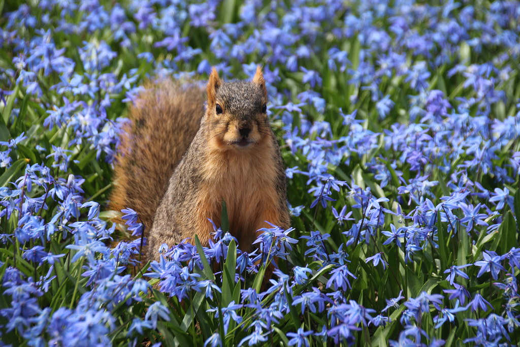 303/365/3225 (April 10, 2017) - Squirrels in Ann Arbor at the University of Michigan (April 10th, 2017)