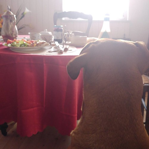 Good morning people. My humans prepared #breakfast. I look out so they won't touch it before me. Woof 🐕  #dog #goodday #goodchoices #goodmorning #dogsrule