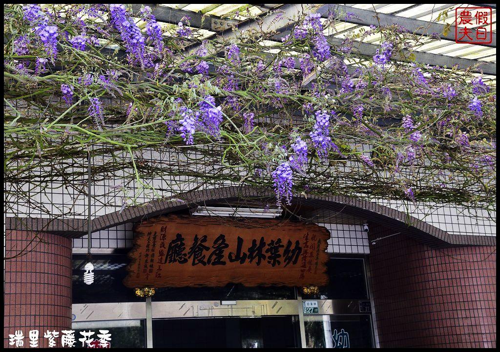 瑞里紫藤花季_DSC4705