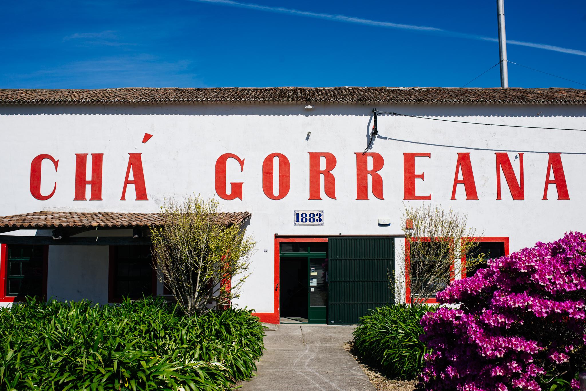 Chá Gorreana, Európa egyetlen teültetvénye