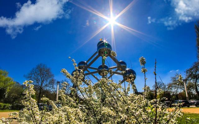 Atomium fleuri