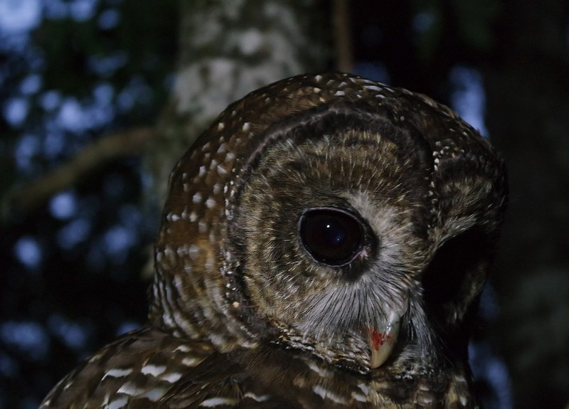 Northern Spotted Owl Demography Project