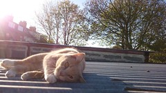 Roof wombling  #catsofinstagram #igcats #cat #roof