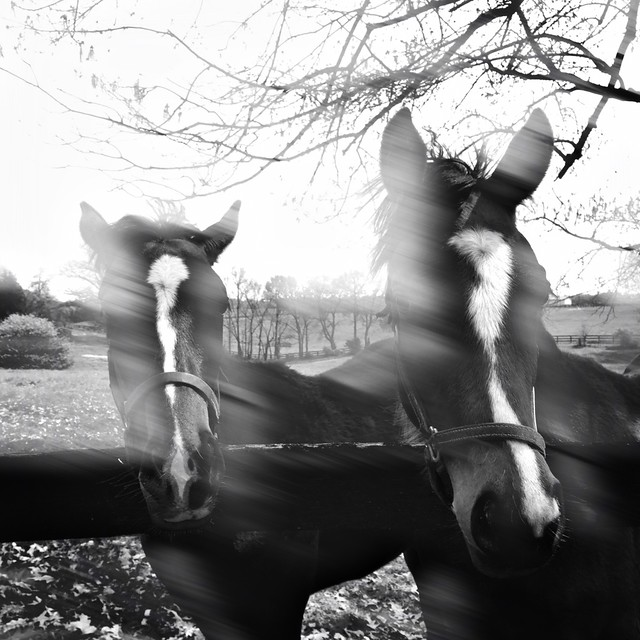 Header of All the Pretty Horses