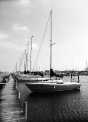 Nivå Havn, den anden mole