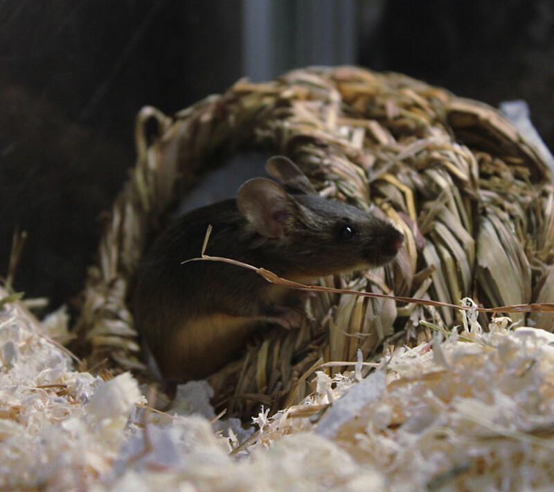 hiiri1