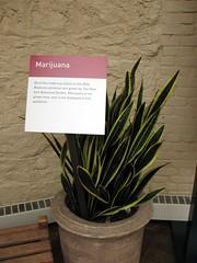 herbal marijuana