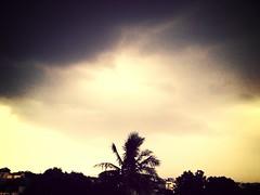 Skies.
