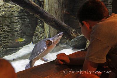 adventure-aquarium-10