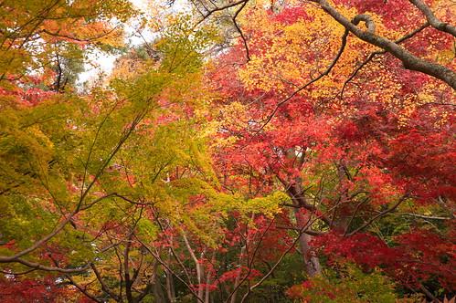 【写真】2012 紅葉 : 笠置山もみじ公園/2020-05-28/IMGP6133