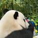Yun Zi Celebrates 4th Birthday by Rita Petita