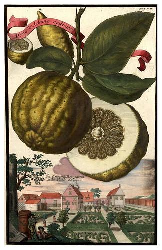 017-Nürnbergische Hesperides-1708-1714- Universitäts- und Landesbibliothek Sachsen-Anhalt