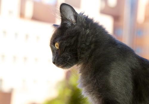 siam el gato - 3