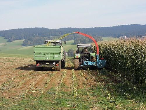 トウモロコシ収穫風景