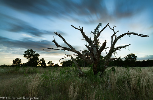 longexposure sunset tree clouds landscape florida deadtree goldenhour satesh 10stop leebigstopper peaceinart miramarpinelands