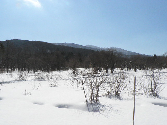 振り返ると霧ヶ谷湿原が広がり,奥には苅尾山が見えた.