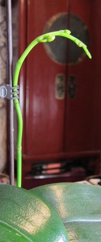 Orkidea päivänvalolampun valossa by Anna Amnell
