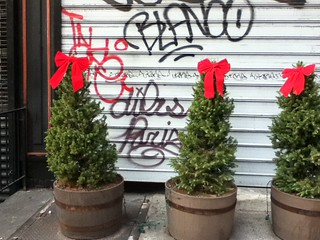Blanco With Christmas Trees - NYC