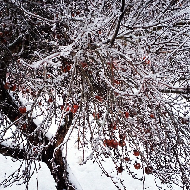 Today's ice. #icestorm2013 #maine #waldocounty