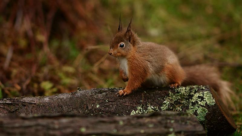 Cautious Squirrel
