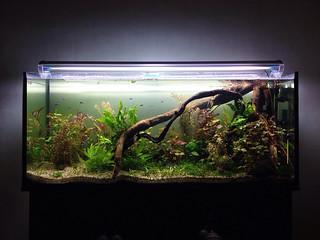 Nature aquarium update.