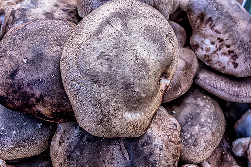 Mushroom caps at the Farmer's Market 03-2014 by joeeisner