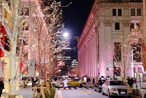 hanami Nihonbashi Sakura festival 14