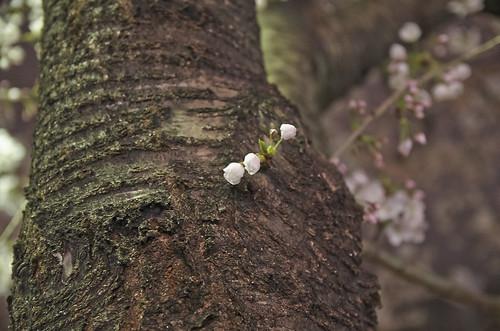 【写真】2014 桜 : 木屋町通/2021-09-17/IMGP5612