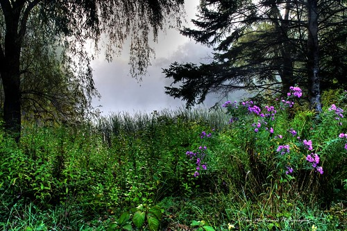 24105l canon pond fog wildflowers wisconsin wausau landscape scenery hdr photomatix tonemapping morning dawn daybreak canon6d marathoncounty robertmonkgardens centralwisconsin geotagged digital midwest usa northamerica america wausauwisconsin park botanicalgardens canoneos fineart