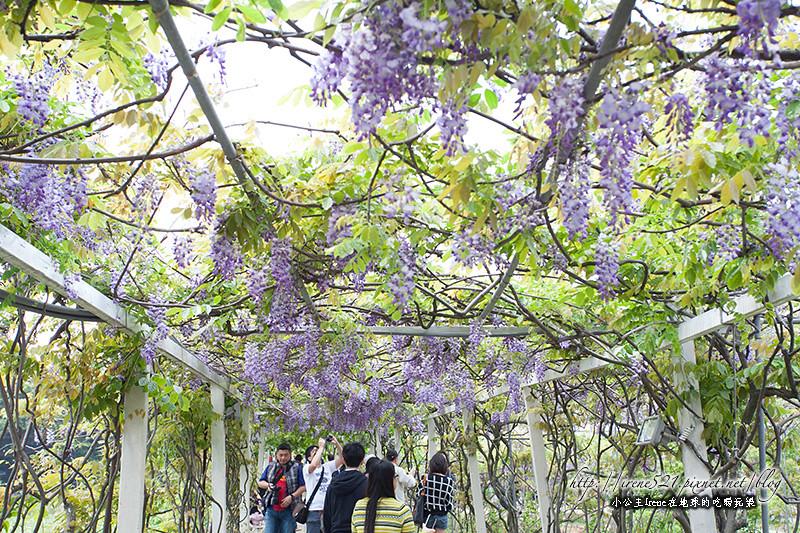 14.04.06-淡水.紫藤咖啡園