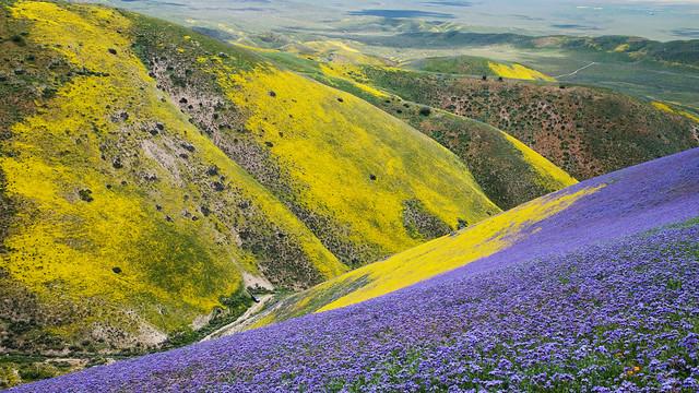 Carrizo Plain Super Bloom