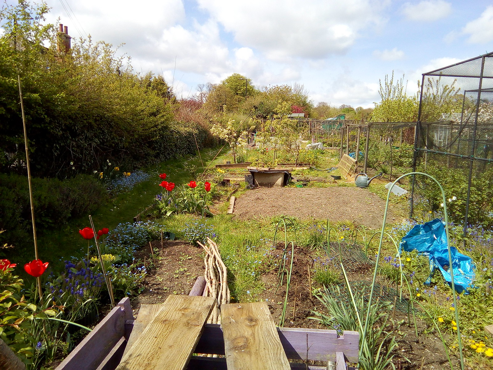 Allotments Saffron Walden