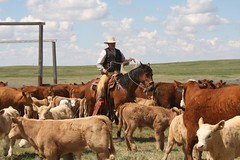 Heaven is high and earth wide.  If you ride three feet higher above the ground than other men, you will know what that means. ~Rudolf C. Binding #ranchlife #specialareas #cowboysofinstagram #buckaroo #aqha