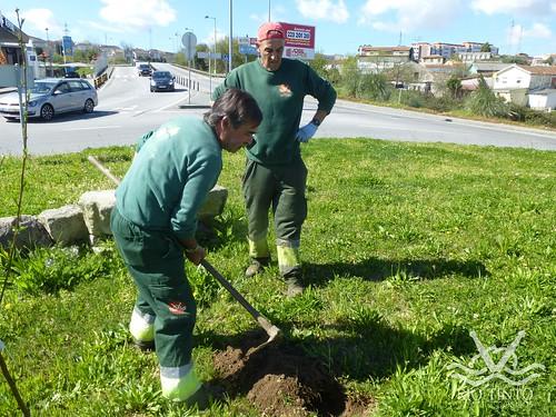 2017_03_21 - Plantação de Árvores pela JFRT (6)