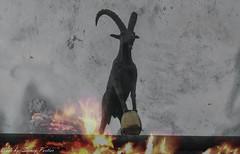 Steenbok!