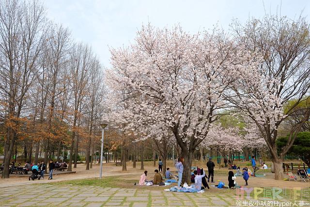 首爾林seoul forest (14)