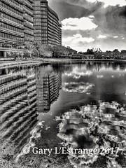 Reflections, Grand Hyatt, Tampa Bay