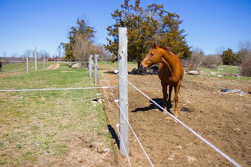 Mitchell Farm Equine Retirement Home