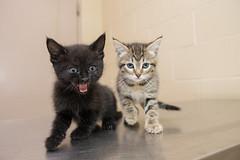 Kitten OCAS 041717-A375121-2